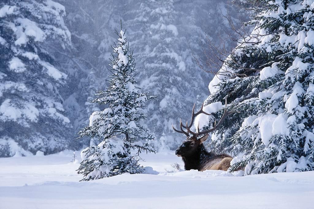 """""""Esta Semana Santa he ido a las Rocosas a esquiar y ver renos. ¿Y tú qué tal?"""""""