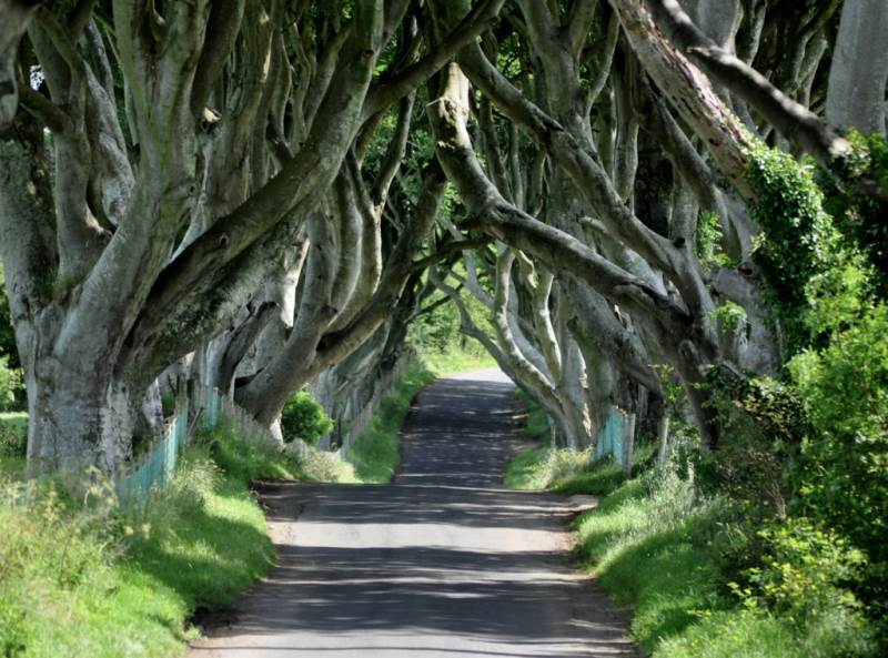 Dark Hedges Irlanda